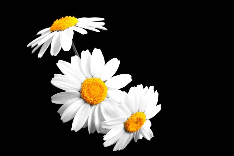 Flower, take 67