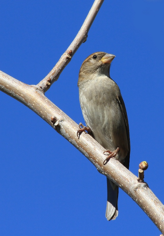 Backyard Birds: Framed