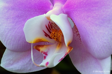 Dow Orchid