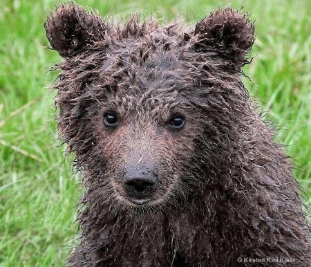 Curious Bear Cub