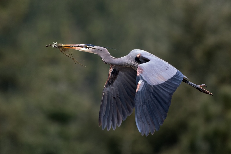 heron home improvement project