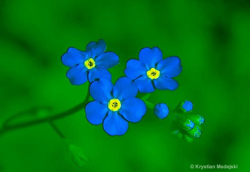 184  - ID: 14841154 © Krystian Madejski