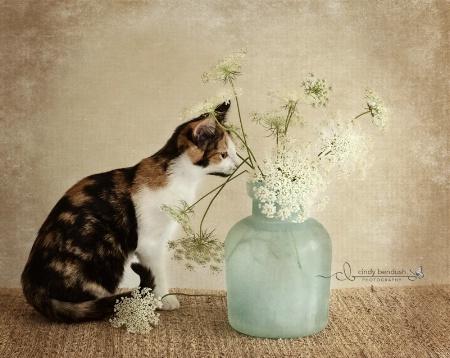 Nosy Kitten