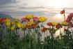 Lake blooms