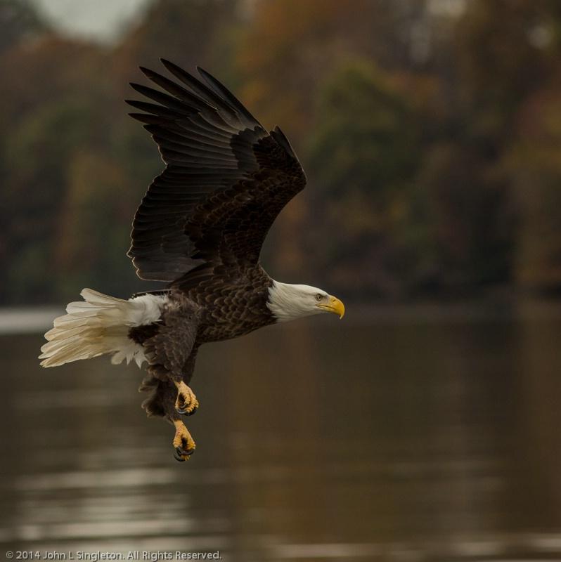 On the Hunt!  - ID: 14841905 © John Singleton