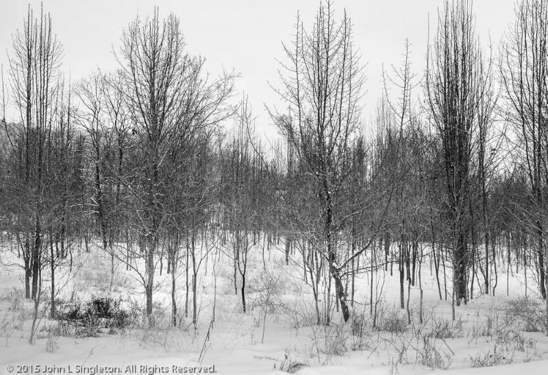 Bare Winter - ID: 14841906 © John Singleton