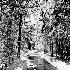 2Driveway B/W - ID: 14849493 © Frederick P. Brown