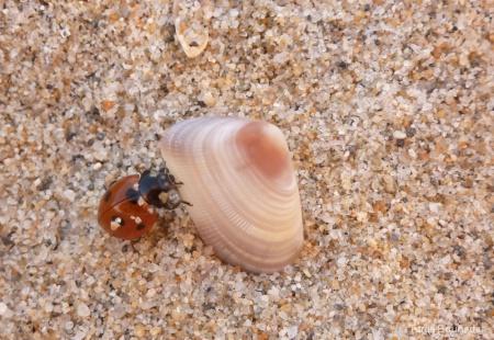 Shell climbing