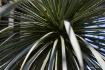 Shadows in a Palm