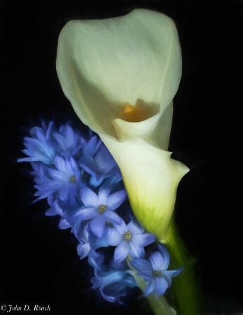 Hyacinth and Calla Lily rendered as if watercolor