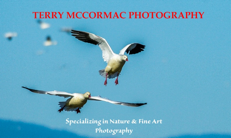 - ID: 14866835 © TERRY N. MCCORMAC