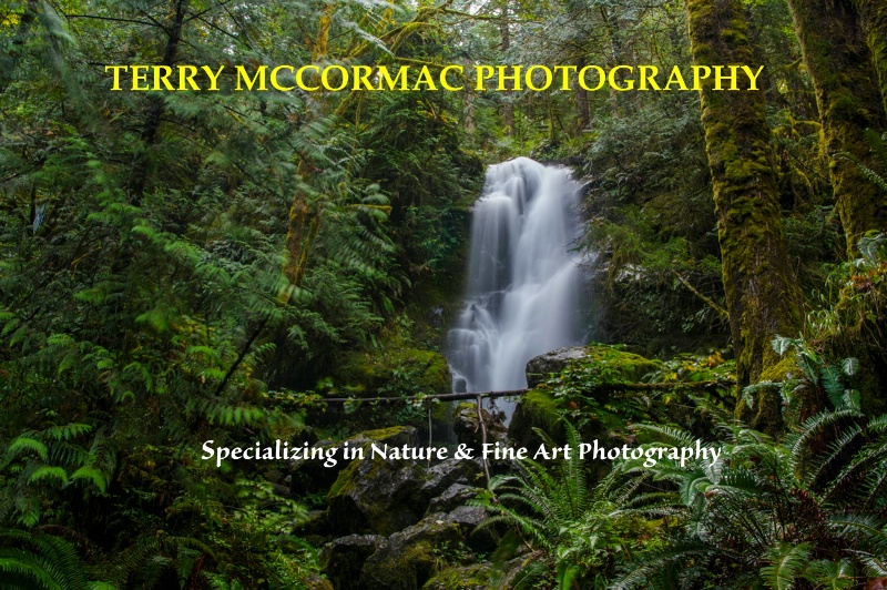- ID: 14866847 © TERRY N. MCCORMAC