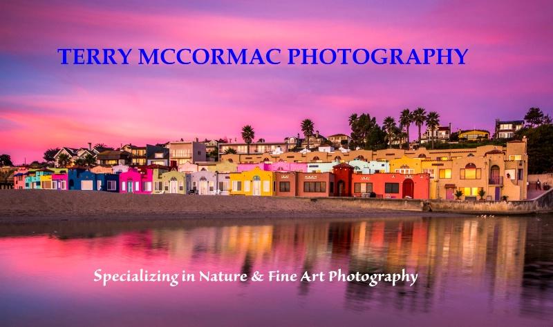 - ID: 14866848 © TERRY N. MCCORMAC