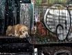 Dogie Train Ride