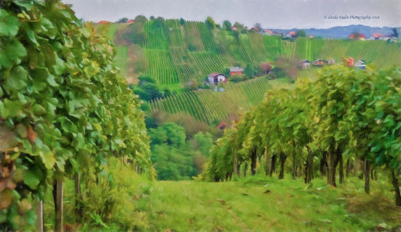 Hungarian Vineyards