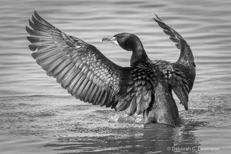 Cormorant Pose