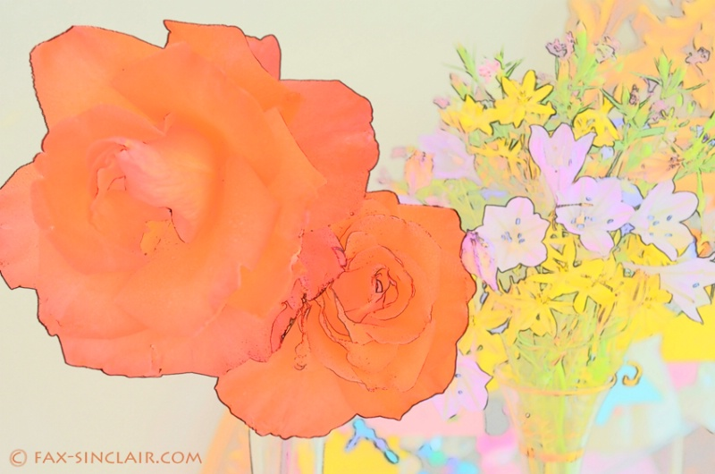 Orange Roses - ID: 14884038 © Fax Sinclair