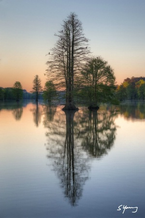Cypress Trees at Dawn; Stumpy Lake, Va.