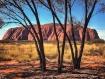 Uluru through the...