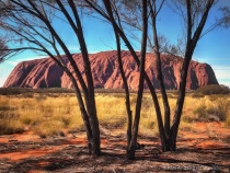 Uluru through the Trees
