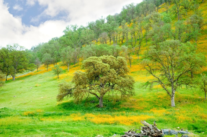 Madera Foothills