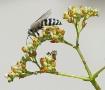 Backyard Bugs #1