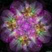 Chiffon Floral