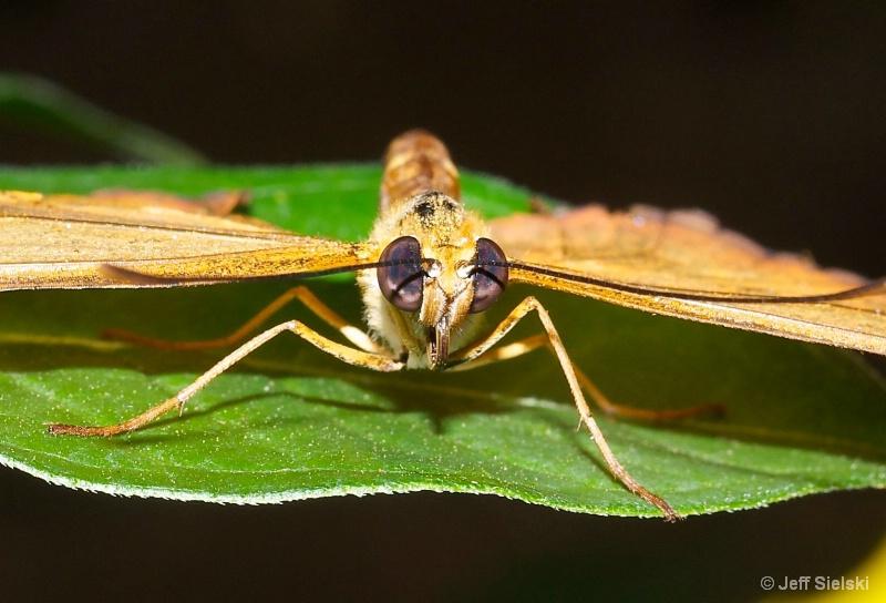 Eye To Eye!!   Julia Butterfly