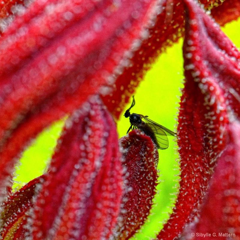 visitor in azalea - ID: 14896238 © Sibylle G. Mattern
