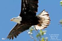 Eagle - Boise Greenbelt