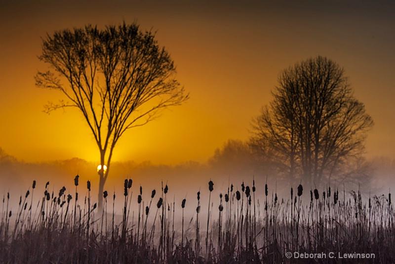 Swamp at Sunrise