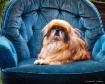 Royal Blue Chair