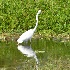 © SHIRLEY W. BENNETT PhotoID # 14902644: A HERON STIRS ITS REFLECTION