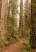 Redwood Selfie