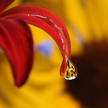 Dripping Sunflowers