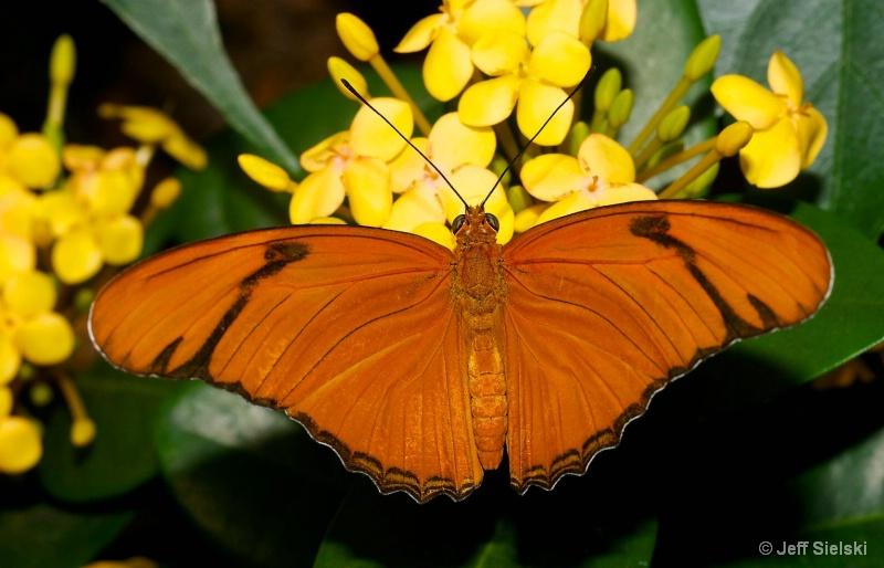 Relaxing Morning!!  Julia Butterfly
