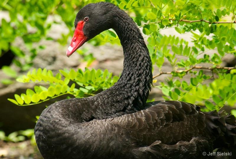 Strike A Pose!!  Black Swan