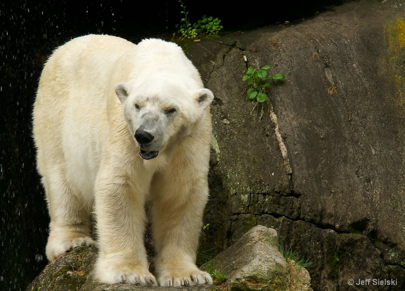 I Like Winter!!!  Polar Bear