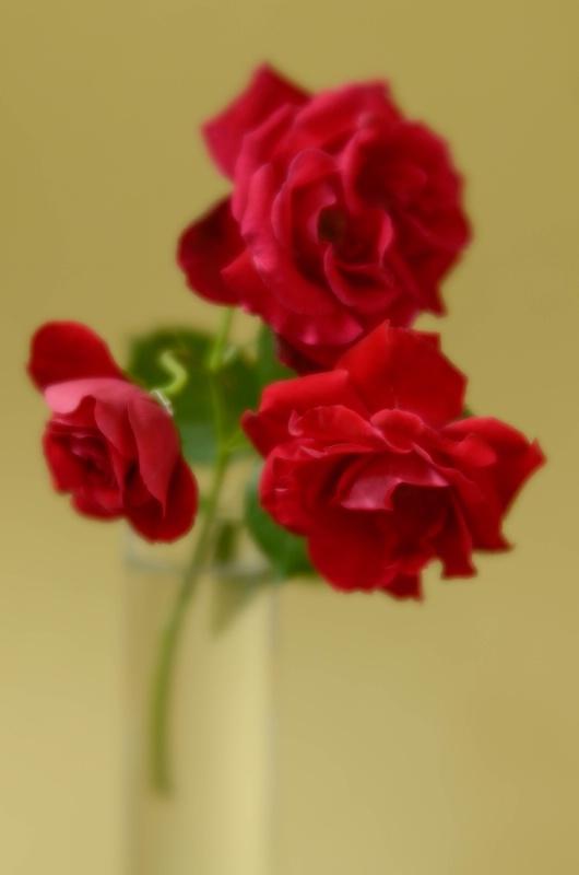 Garden Roses II - ID: 14910924 © Nora Odendahl