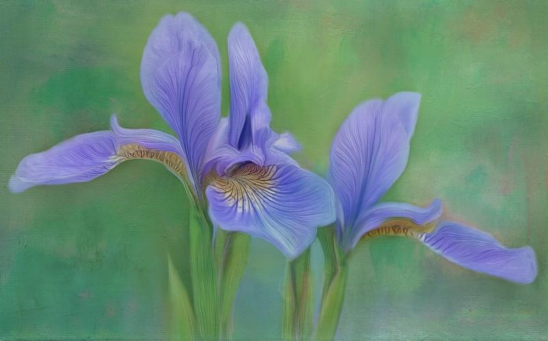 Iris Twins
