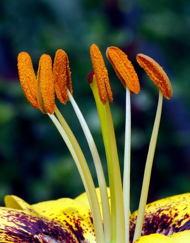 Backyard Blooms:  Having a Chat