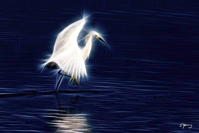 Egret Dance; Chincoteague, Va - ID: 14913416 © Richard S. Young