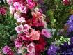 Flowers flowers f...