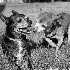 © Lisa Patnaude PhotoID # 14915726: Snoopy and Woodstock