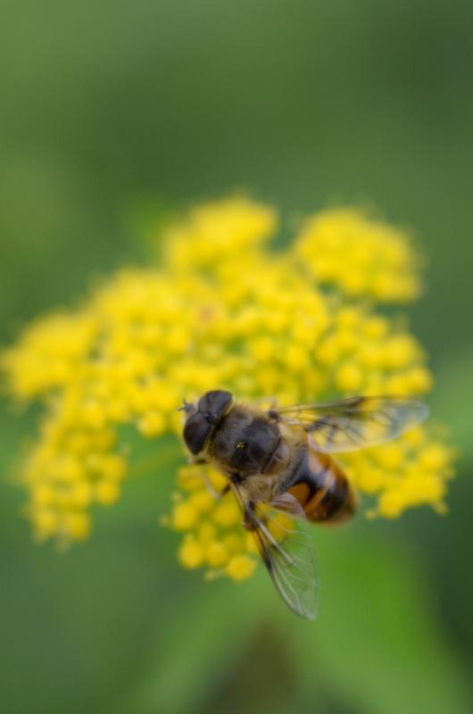 Bee II - ID: 14918026 © Nora Odendahl