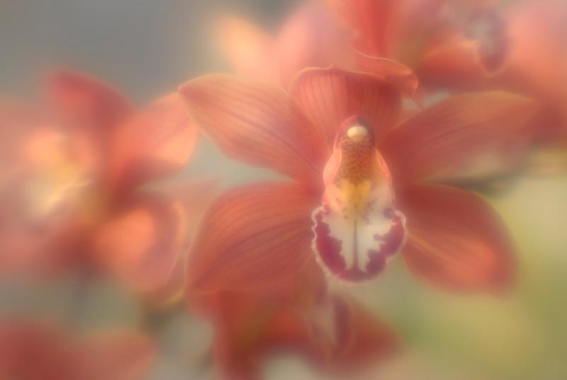 Aphrodite - ID: 14918130 © Nora Odendahl