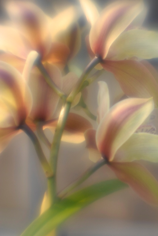 Ariadne - ID: 14918160 © Nora Odendahl