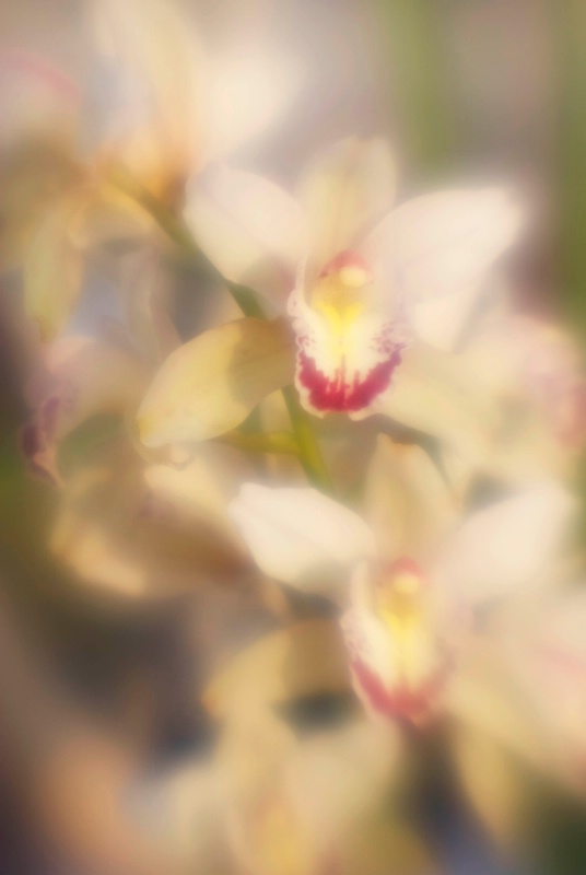 Orchid - ID: 14918189 © Nora Odendahl