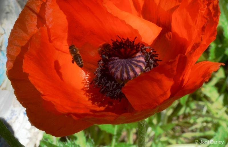 Poppy Visit