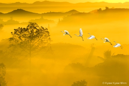 Fly over Golden Morning